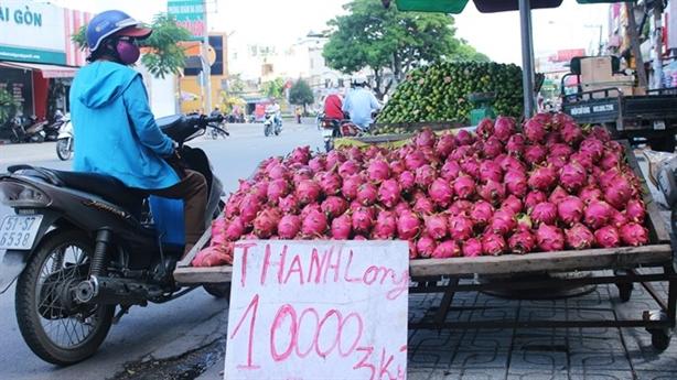Thanh long Bình Thuận rớt giá: Thủ đoạn thương lái Trung Quốc