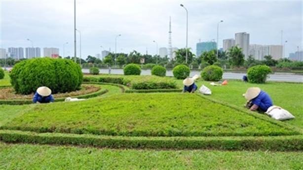 HN chi 700 tỷ/năm để cắt cỏ: Tư nhân báo giá ''bèo''