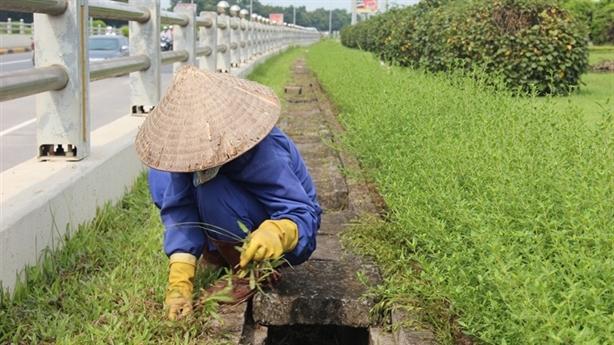 Hà Nội chi 700 tỷ cắt cỏ/năm: Chị cắt cỏ bàng hoàng