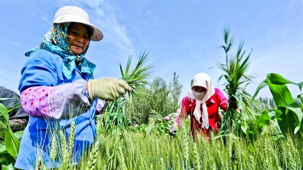 Trung Quốc cảnh báo nỗi lo lương thực