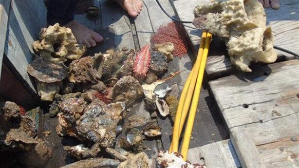 Làm sạch biển hậu Formosa bằng công nghệ Nhật: Quá viển vông