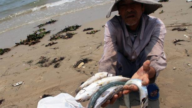 Nhiều mẫu cá nhiễm độc, tiếp tục xét nghiệm 'ăn được không'