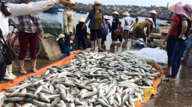 Cá chết hàng loạt tại Nghi Sơn: Nước biển đỏ bất thường