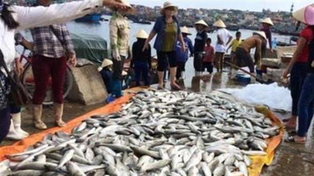 Cá chết hàng loạt tại Nghi Sơn: Do chuyển dòng hải lưu?