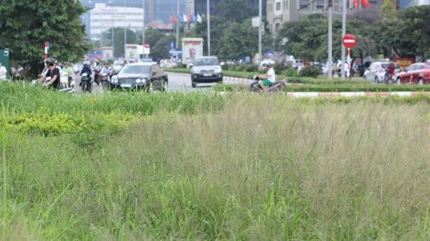 Hà Nội giảm 708 tỷ/năm tiền cắt cỏ: Trước lãng phí quá...