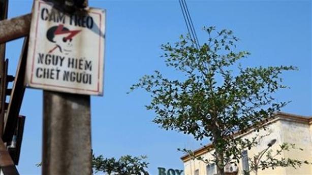 Hà Nội trồng cây dưới đường điện cao thế: Quá khó hiểu!