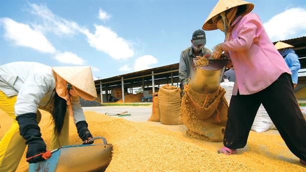 Doanh nghiệp Việt gặp khó khi xuất gạo sang Singapore
