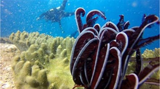 Nhiệt điện xin đổ 1,5 triệu m3 chất thải xuống biển