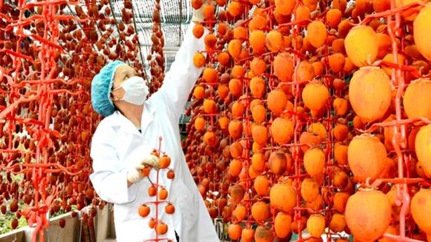 Hồng Đà Lạt đánh bật hàng Trung Quốc nhờ công nghệ Nhật