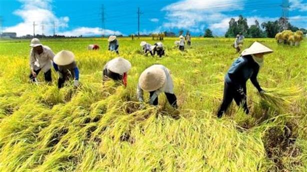 Việt Nam sang Campuchia học trồng lúa: Nhiều kinh nghiệm hay