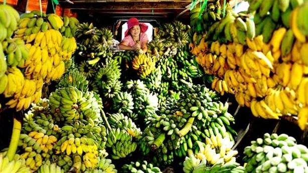 Nhiều đối tác từ bỏ nông sản Trung Quốc, chọn Việt Nam