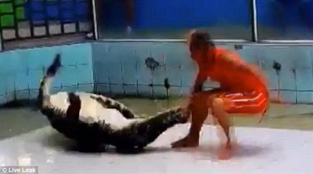 Clip: Trêu ngươi cá sấu, huấn luyện viên bị đớp đau đớn