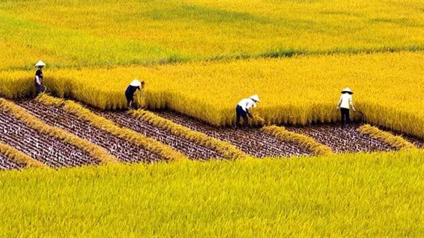 VN sang Campuchia học làm thương hiệu gạo: Lời người trong cuộc