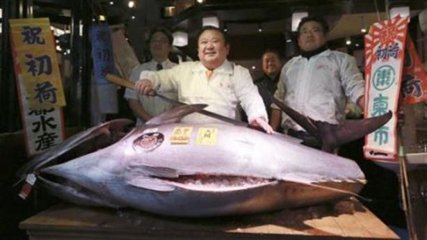 Con cá ngừ Nhật bán 14 tỷ: Giấc mơ ngư dân Việt