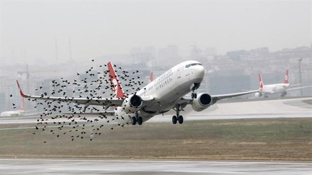 Chi 9,1 triệu USD để đuổi chim