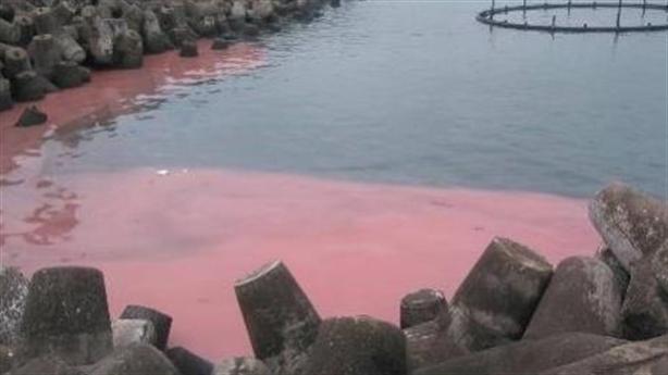 Ngư dân nói gì về dải nước đỏ tại Vũng Áng