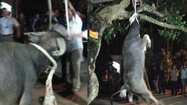 Không cho đâm trâu, chém lợn, người Việt vẫn ăn thịt chó