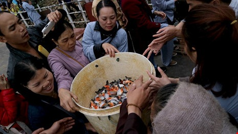 Phóng sinh cá chim xuống sông Hồng: Mất thời gian, gây hại