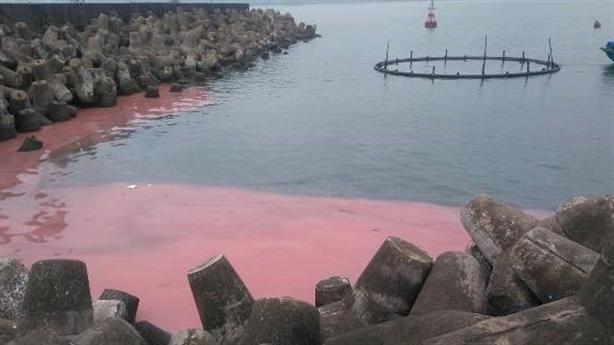 Dải nước lạ màu đỏ ở cảng Vũng Áng: Không nguy hiểm?