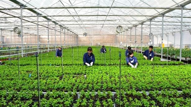 Gói tín dụng 100.000 tỷ cho nông nghiệp: Thêm chỉ đạo mới