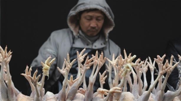 Từ gà giống tới gà thịt Trung Quốc tràn vào Việt Nam