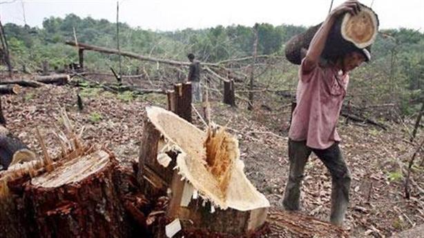 ĐBQH Võ Trọng Việt: Rừng làm giàu cho lâm tặc