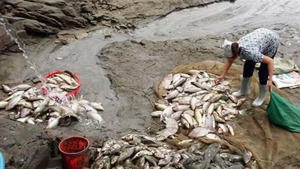 Cá chết hàng loạt tại Lào Cai: Nước đục như nước gạo