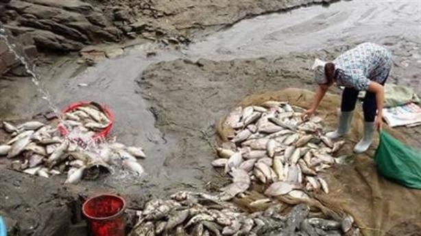 Cá chết hàng loạt ở Lào Cai: Vỡ ống xả thải