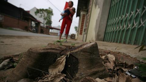Thêm 5 xã chặt cây đòi vỉa hè: Đúng kế hoạch?