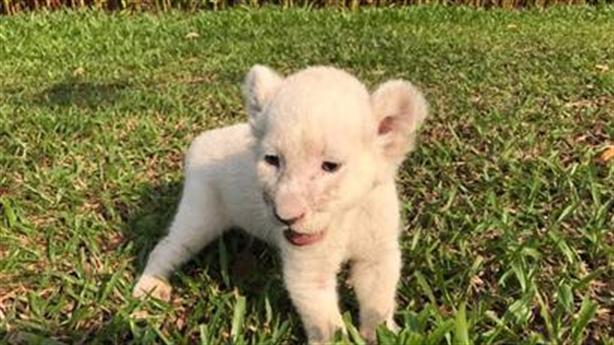 """Nhiều """"Công dân"""" mới của Vinpearl Safari ra đời"""