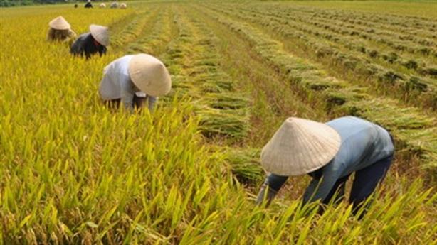 Năng suất lao động nông nghiệp Việt bằng 1/2 Philippines