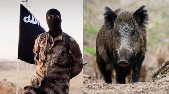 Sốc: Lợn rừng tấn công giết chết 3 khủng bố IS