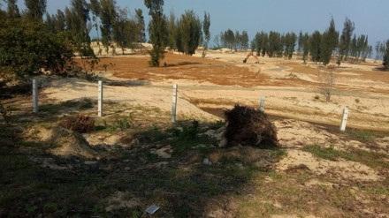 Phá rừng làm sân golf: Phú Yên tạm dừng dự án