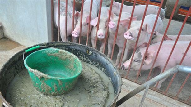 Giải cứu thịt lợn: Đừng nói về lỗi