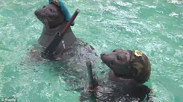 Nga đào tạo hải cẩu bắn súng, tháo dỡ mìn