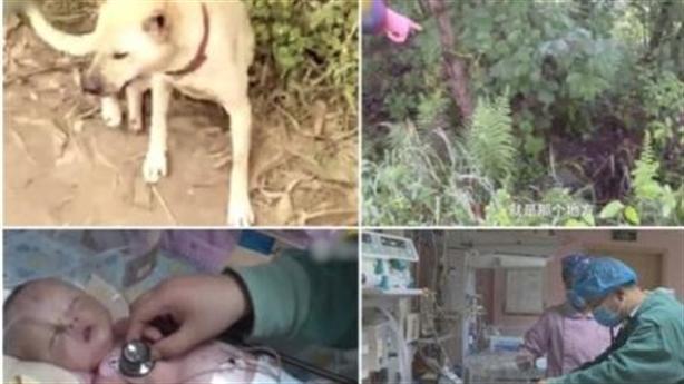 Chú chó cứu bé 1 tháng tuổi bị chôn sống