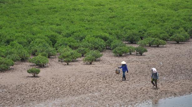 Thái Bình xin phá rừng: Địa phương chưa rõ quy hoạch