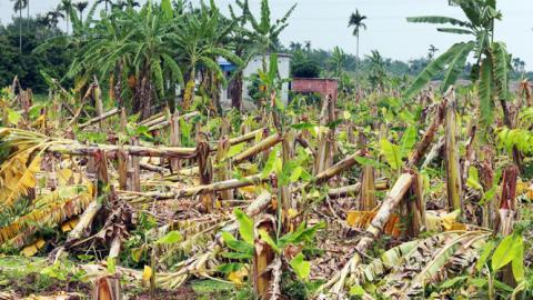 Thông tin mới vụ chặt tan hơn 2000 cây chuối
