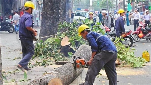 Hà Nội chặt hạ 1.300 cây xanh: Không nôn nóng?