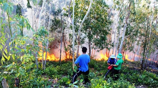 Cháy 15 ha rừng Tam Đảo tại địa điểm nhạy cảm