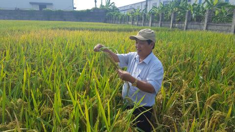 Liên kết phát triển nông nghiệp vùng Đồng bằng sông Hồng