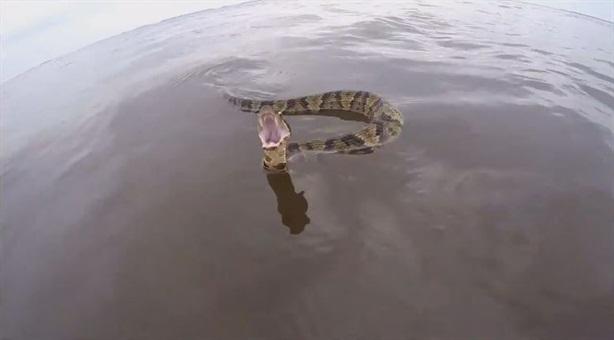 Loài rắn cực độc đuổi theo thuyền dọa tấn công người