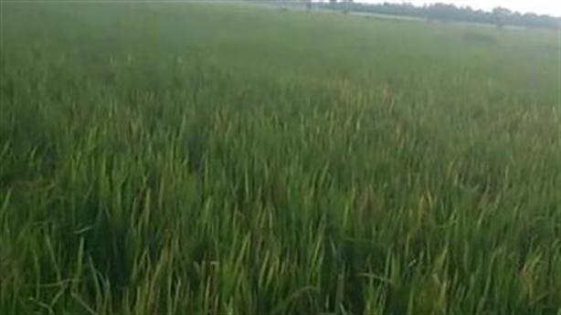 Thi thể 2 anh em dưới ruộng lúa: Thân nhau lắm!