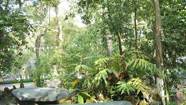Cần cân nhắc Việt Kiều có được là chủ rừng hay không?