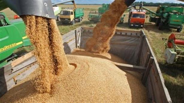 Mỹ loan báo sự thật sức mạnh nông nghiệp Nga
