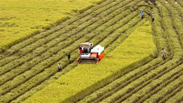 Thí điểm tích tụ ruộng đất: Phải học hỏi Nhật Bản