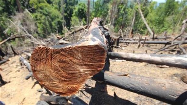 Trăm hécta rừng Tiên Lãnh bị phá: Nhiều câu hỏi tại sao?