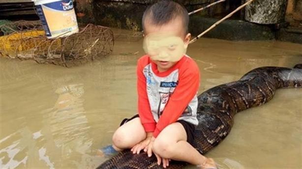 Cậu bé 3 tuổi cưỡi trăn ở Thanh Hóa lên báo Tây