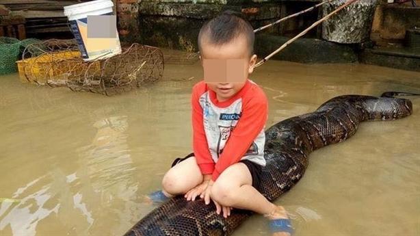 Sự thật bé trai cưỡi trăn khổng lồ giữa nước ngập