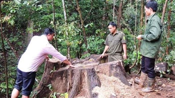 Trưởng Công an xã cầm đầu băng nhóm phá rừng lấy gỗ